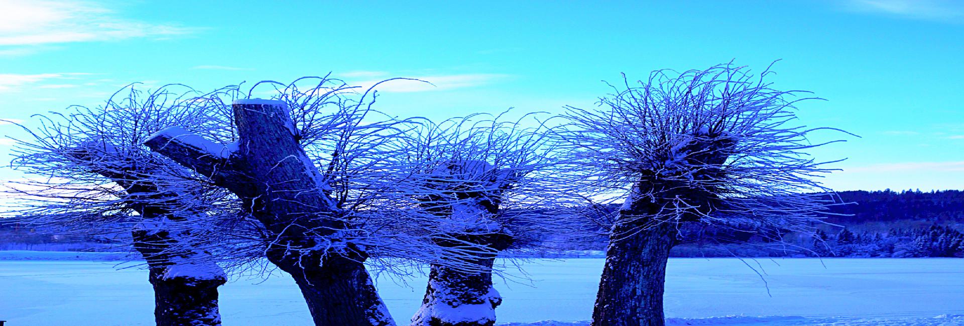 Bilde av trær, redigert.jpg